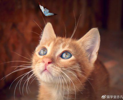 同窝中性格最差的小猫怎么训练?