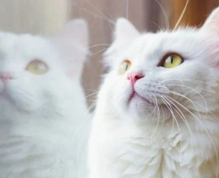 撸自家猫时,旁边小野猫也把头凑了过来…