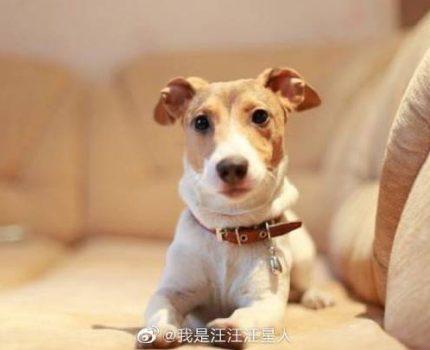 初次养狗,麦麦教你从狗狗反应看,什么性格类型的狗狗适合自己