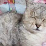 18岁老猫离世,4岁女儿痛哭,随后幼稚一语,令妈妈瞬间泪崩