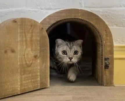 家有猫主子怎么办?这些家装设计是时候了解一下了~