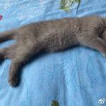 我的小猫叫阿花
