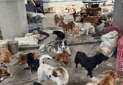"""那些被""""赶到""""桥底下的几百只流浪狗呢?该如何安置?"""