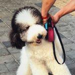 214@365(8月1日):活体Snoopy