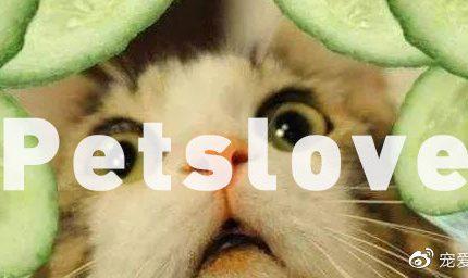 猫为什么会被黄瓜和香蕉吓飞?