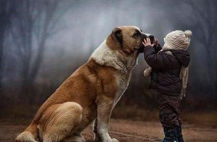 安爸告诉您为什么养狗狗,养狗狗有好处?