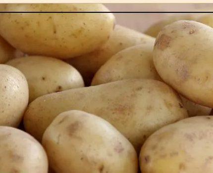 农家种植黄土豆,美味健康一步到位