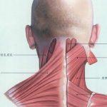 最详细肌肉拉伸教程一:颈部拉伸