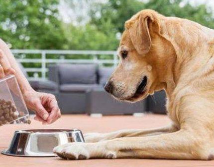 如何解决狗狗的挑食问题?