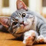 这猫咋天天玩劈叉?主人:它是在跟我告别。