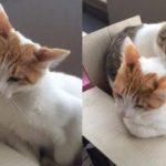 猫私闯房屋睡大觉,隔天还带同伴来占领,网友:有完没完!