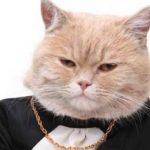 管家说养猫:猫咪为什么对激光笔那么痴迷?