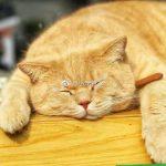 """管家说养猫:养猫会很脏吗,这""""三点""""告诉你答案!"""
