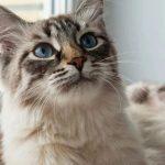 如何让猫咪主动舔你???