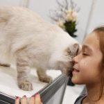 安爸告诉您怎样和猫咪变得更亲密