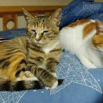 我有两只猫🐱