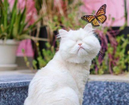"""波斯猫双眼失明,了解它的悲惨经历后,新主人成为了它的""""眼"""""""