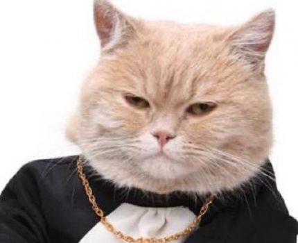管家说养猫:新手养猫前,你必须要知道的事项