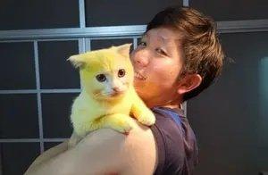 泰国小猫患皮肤病,主人抹姜黄治疗后,喜获一只皮卡丘