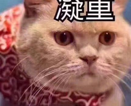 你知道如何给猫咪修脚毛么?