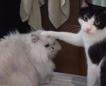 喵生艰难,总有一只猫爪,会在背后阴你一把!
