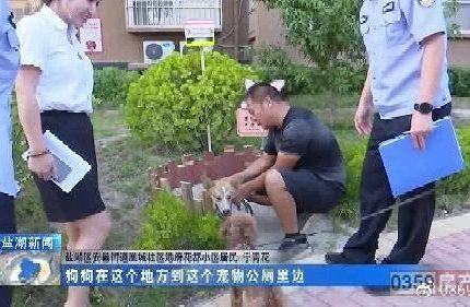 运城港府花都小区:宠物公厕建起来 小区环境大改善