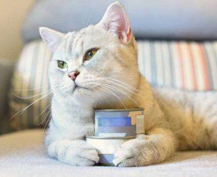 AD罐头猫咪应该这样吃!