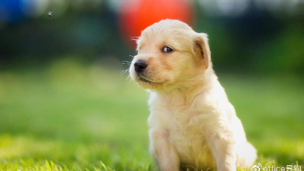 下雨天照顾狗狗,要更加留心这些…