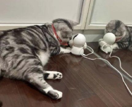 监控猫主子, 算侵犯猫的隐私权吗?