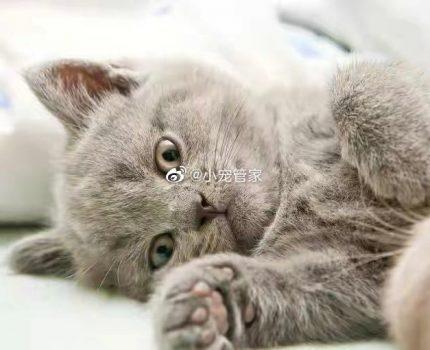 猫咪的咕噜声能帮助人类缓解疼痛,还能延长人类寿命?真的假的?