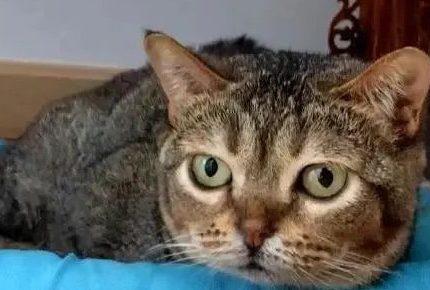 因为长得不太聪明,这只猫红了,22万粉丝每天只为看它舔空气