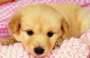 感动!狗狗每天坚持从山脚爬到山顶,原来是想念去世的狗妈妈