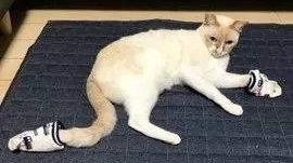 懂你好难之猫咪到底在想啥