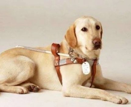 我想对你说——一只狗狗的临终遗言