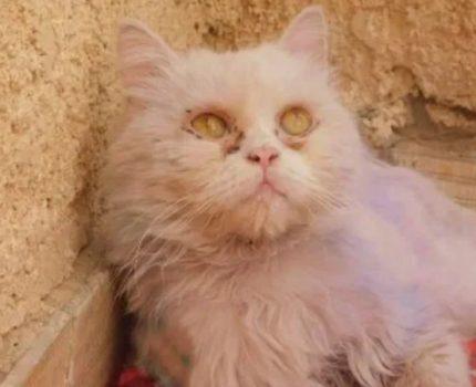 """白猫无故被人涂成""""彩色猫"""",只因一群少年想炫耀,年少不更事?"""