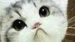 自带体香得五大猫咪!你家猫咪上榜了么?