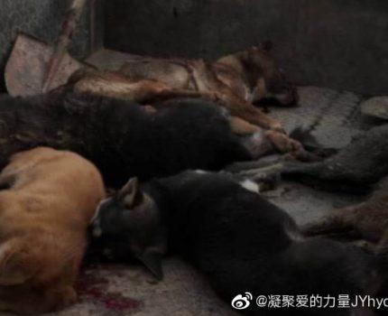#央视呼吁反虐待动物尽快立法#