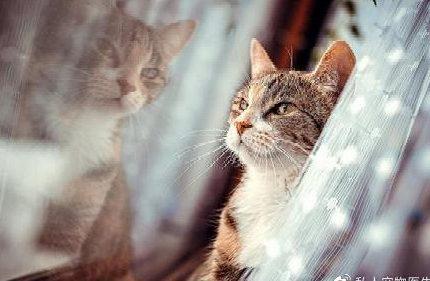 安爸告诉您猫咪总是望向窗外,它是想出去遛弯么?
