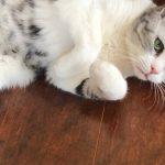 猫越打越听话,但是不能殴打,掌握方法很重要