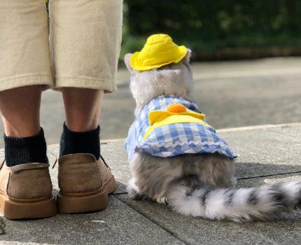 我买了一只仿真猫咪玩偶,代替真猫陪伴我!