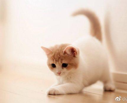 猫咪搬家掉很多毛是应激吗?猫咪应激会掉毛吗?