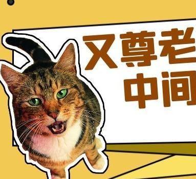 猫咪特别尊老爱幼,就是中间那块使劲揍!?
