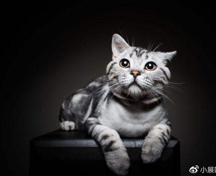美短猫半夜叫声很恐怖,美短猫半夜总叫是怎么回事