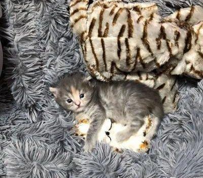 小奶猫跑到隔壁房间,对新猫咪一见钟情:妈!我找到男友了
