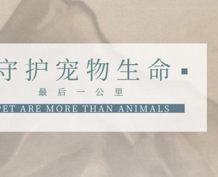 【加盟故事】李文涛:守护宠物生命的最后一公里