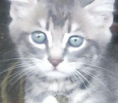 如果有来生,我愿做一只讨主人欢心的家猫