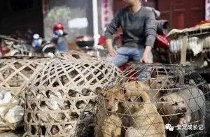 狗狗集市上按斤出售,一只小狗只要几十元,狗贩称肉质鲜美
