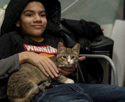 小伙将超市小猫偷偷抱走,却让自闭男孩失去唯一朋友,他也很爱猫