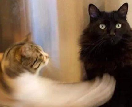 猫:用最萌的爪,打最狠的拳!