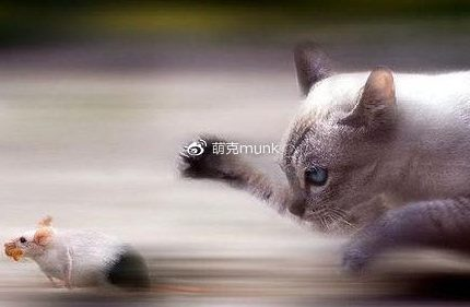 萌克百科|OMG,原来动画里猫抓老鼠都是骗人的